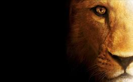 Lion-wallpaper-for-desktop-hdtv
